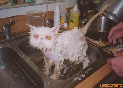 funnypart-com-wet_pussy.jpg