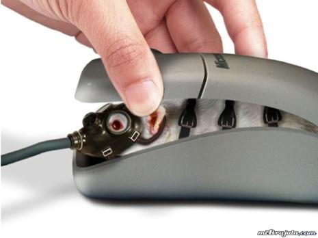 raton-interior.jpg