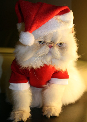 cat-in-santa-hat.jpg