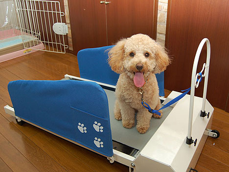 doggy-treadmill.jpg
