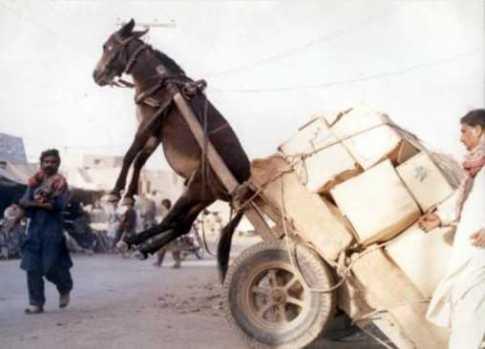 ol-donkey-cart.jpg