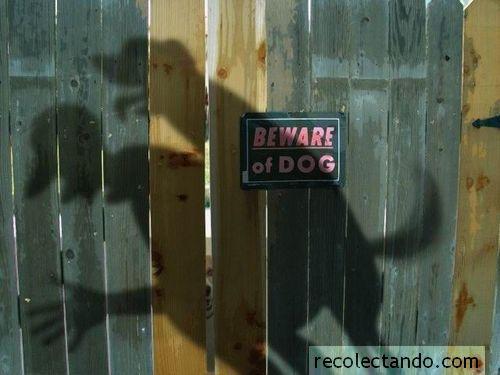 perros-cuidado.jpg