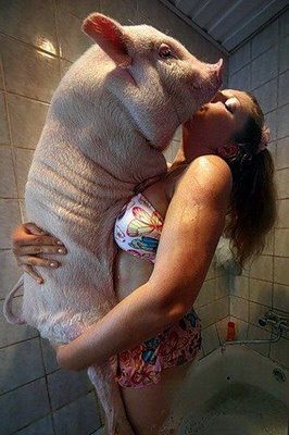 asi inicio la gripe porcina